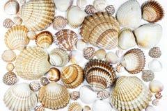 Ramassage de seashells photo libre de droits