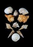 Ramassage de Seashells photo stock