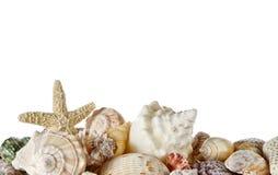 Ramassage de seashells photographie stock libre de droits
