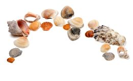 Ramassage de seashells Photographie stock