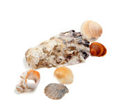 Ramassage de seashells Photos libres de droits