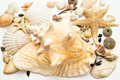Ramassage de Seashells Photo stock