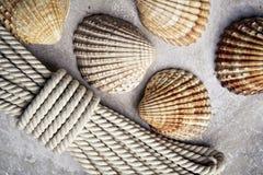 Ramassage de seashells images stock