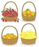 ramassage A rassemblé une récolte riche que le panier est plein du fruit juteux mûr Bananes fraîches, oranges, kakis, cerises, a illustration stock