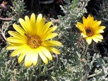 Ramat Gan Park Bee en una flor 2007 Fotos de archivo libres de regalías