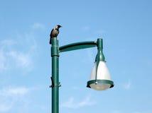 Ramat Gan Park Crow 2008 Stock Image
