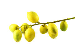 Rambai. Burmese grape or Rambai ,Thai native fruit name in thai is Ma Fai Stock Images