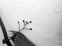 Rambler. Rambling plant on neutral background black & white image Stock Photo