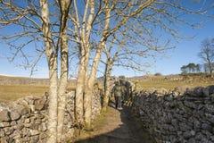 Rambler walking in english countryside Stock Photos