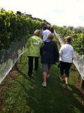 Ramblers at Matakana vineyard Stock Photo