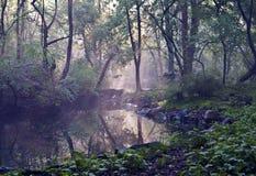 Rambles Central Park Fotografie Stock