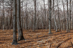 Rambouillet forest fall season France Stock Photography