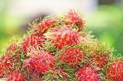 Ramboutan rouge frais, fruit tropical photos libres de droits