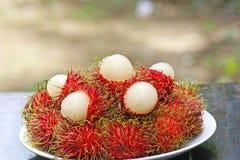 Ramboutan rouge frais, fruit tropical images libres de droits