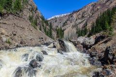 Rambunctious rzeka w Altai górach Zdjęcie Royalty Free