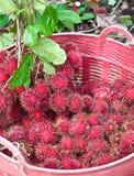 Rambutan στο κόκκινο καλάθι Στοκ Εικόνα