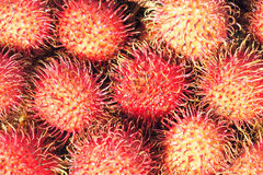 Rambutan. The close-up of rambutan fruits. Scientific name: Nephelium lappaceum royalty free stock image