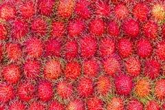 Rambutan Arkivfoto