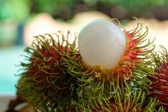 Rambutan Στοκ Εικόνες