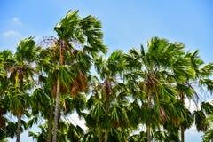 Rambutan asiático de la fruta Imagen de archivo