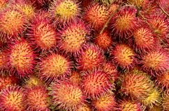 Rambutan close up Royalty Free Stock Image