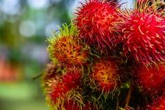 Rambutan de Tailandia Foto de archivo