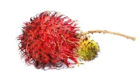 Rambutan, dragon eye - tropical fruit Stock Photos