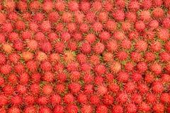 Rambutan för tropiska frukter Royaltyfri Fotografi