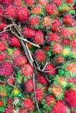 Rambutan Royalty Free Stock Images
