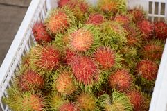 Rambutan fruit. Close up red rambutan fruit Stock Photos