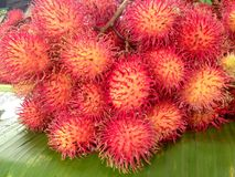 Rambutan fruit. Rambutan deliciou Thai fruits are seasonal Royalty Free Stock Photo