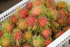 Rambutan fruit. Fresh rambutan fruit in market Stock Images