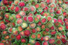 Rambutan fruit in market Stock Photography