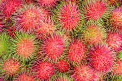 Rambutan fruit. At Thai market Stock Photography