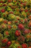Rambutan fruit of thailand Stock Image