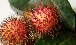 Rambutan Fruit Royalty Free Stock Image