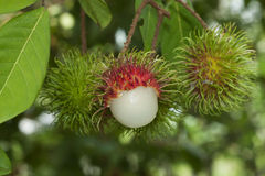 Rambutan fruits Royalty Free Stock Photos
