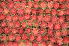 Rambutan Fruits Stock Images