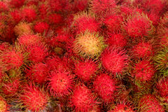 Rambutan fruits in Thailand. Royalty Free Stock Photography