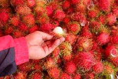 Rambutan fruits in Thailand. Royalty Free Stock Photo