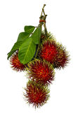 Rambutan with green leaf Royalty Free Stock Image