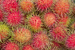 Rambutan or hairy fruit, popular fruit of Thailand Stock Photography