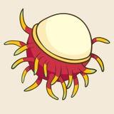 Rambutan, ilustração do vetor Fruta exótica Imagens de Stock