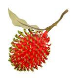 Rambutan isolado no fundo branco Imagem de Stock
