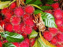 Rambutan in the market. Rambutan is a very popular tropical fruit in Thailand Royalty Free Stock Images