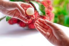 Rambutan nas mãos das mulheres para suas crianças Imagem de Stock
