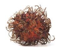 rambutan nephelium плодоовощ Стоковые Фото