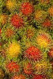 Rambutan. Nephelium lappaceum Linn. or rambutan,the fruit of tropic stock photos