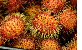 Rambutan, Nephelium lappaceum. Evergreen tree with pinnate compound leaves and oval  fruit covered with long hooked spines, including single seed and lychee Stock Images