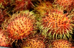 Rambutan, Nephelium lappaceum. Evergreen tree with pinnate compound leaves and oval  fruit covered with long hooked spines, including single seed and lychee Royalty Free Stock Images